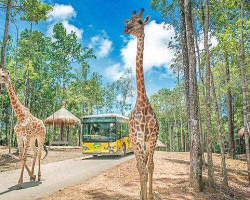 TIN HOT - Vinpearl muốn làm khu du lịch sinh thái Vinpearl Safari hơn 1.100 ha ở Hạ Long