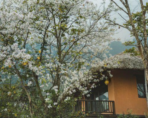 Giữa núi rừng Tây Bắc - Avana Retreat đẹp như một bản tình ca, khuyến mại tưng bừng cho một hè 2021 trong lành